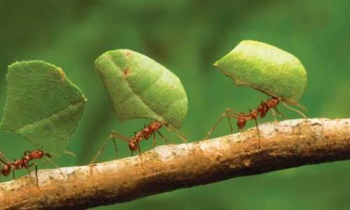 Por-qué-las-hormigas-no-duermen4
