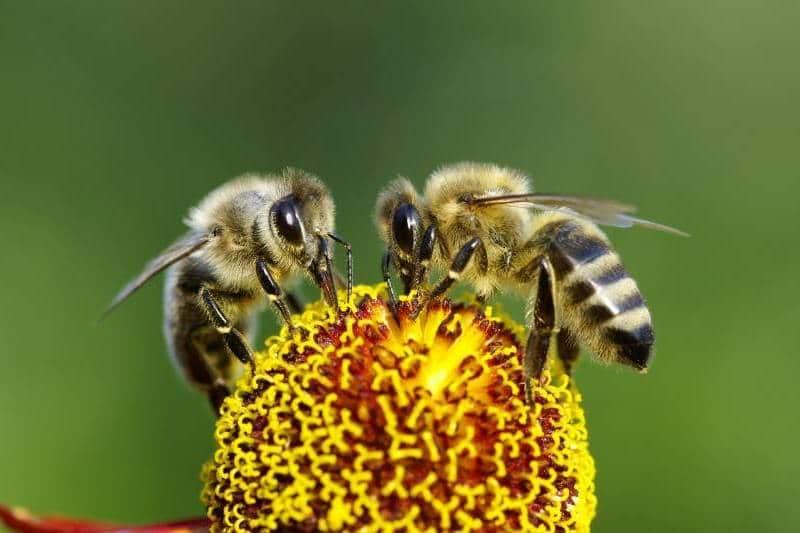 Por qué son importantes las abejas