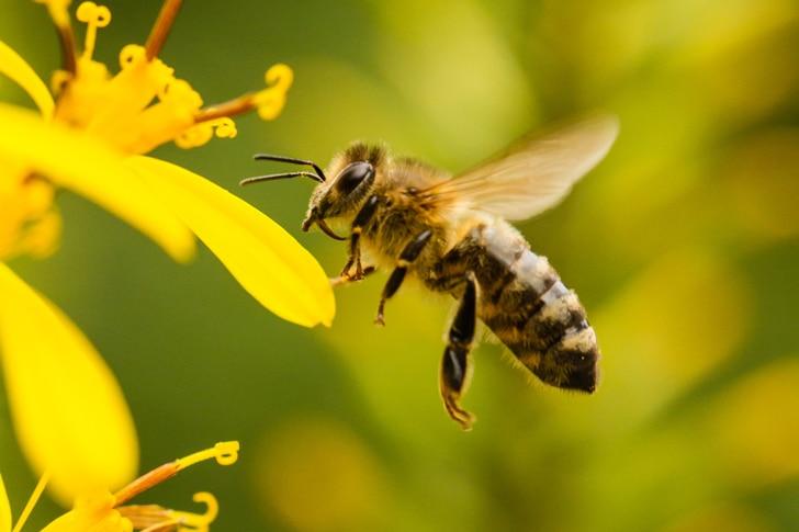 Por-qué-son-importantes-las-abejas2