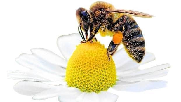 Por-qué-son-importantes-las-abejas5