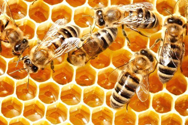 Por-qué-las-abejas-hacen-miel1