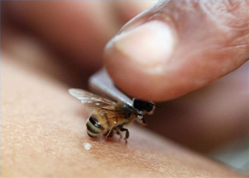Por-qué-las-abejas-mueren-cuando-pican4