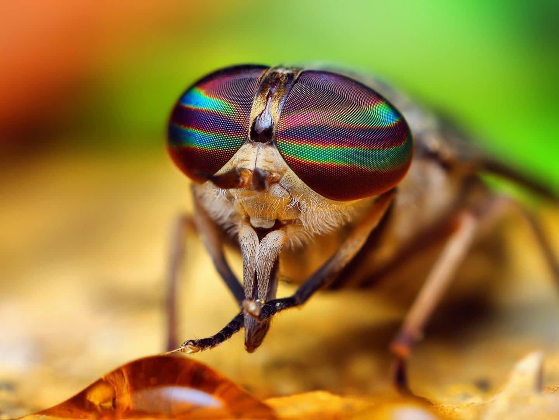Por-qué-las-moscas-se-frotan-las-patas4
