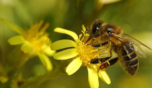 Por-qué-son-importantes-las-abejas4
