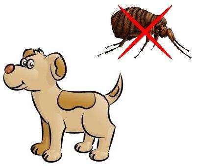 garrapatas en los perros