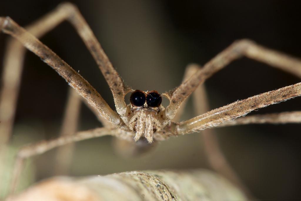 arañas-exoticas-1