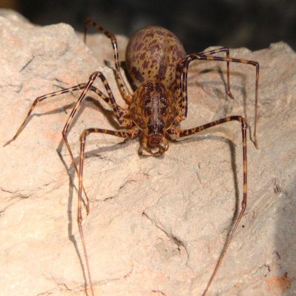 arañas pequeñas