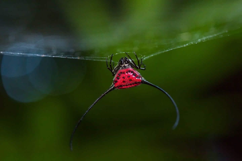 Arañas raras