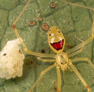 Arañas raras: Todo lo que debes saber sobre ellas
