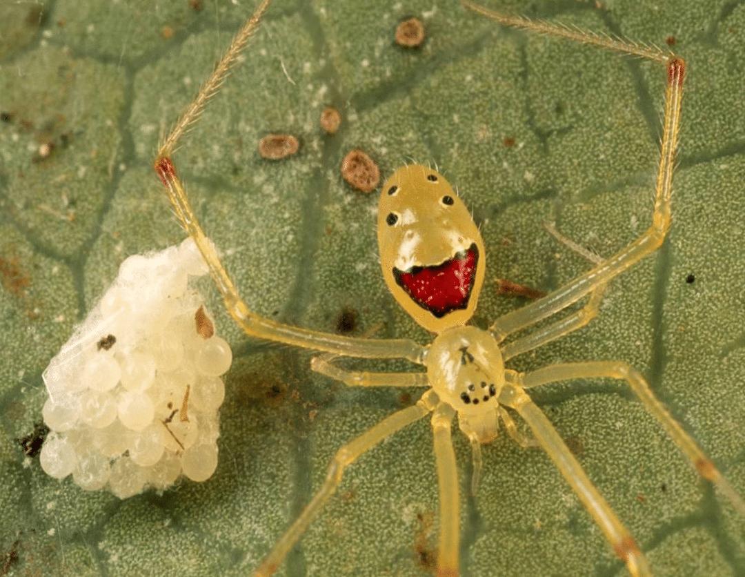 arañas-raras3