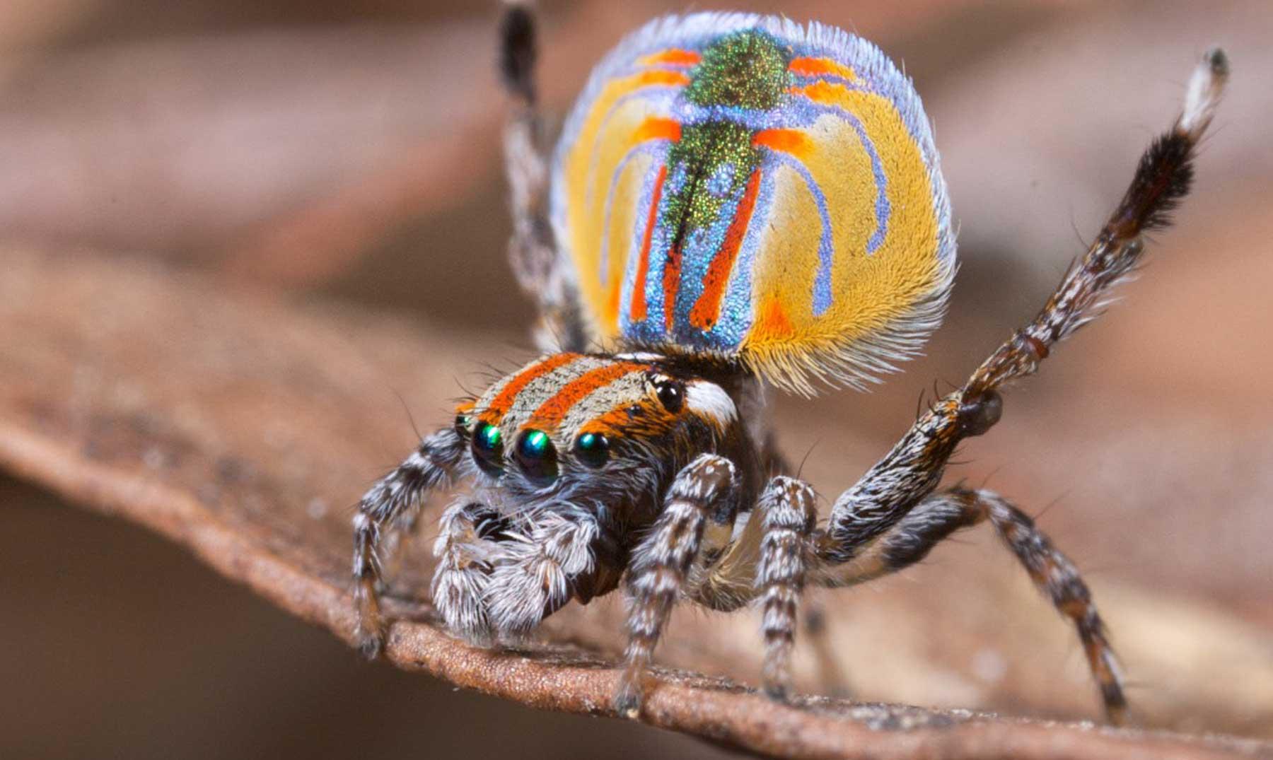 arañas-raras2