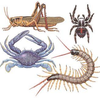 Artrópodos: Significado, características, clasificación y más.