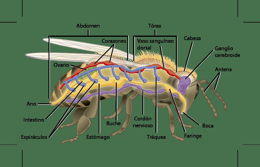Artrópodos-1