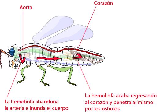 Artrópodos-8