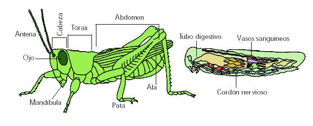 Artrópodos-10