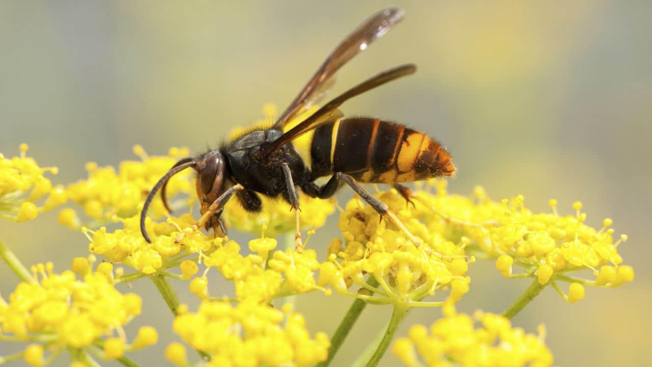 Cucaracha germanica reproduccion asexual de las plantas