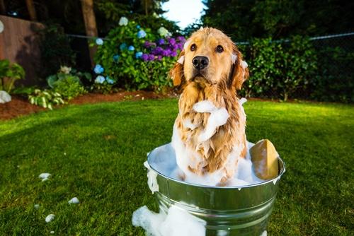 bañar-a-tu-perro
