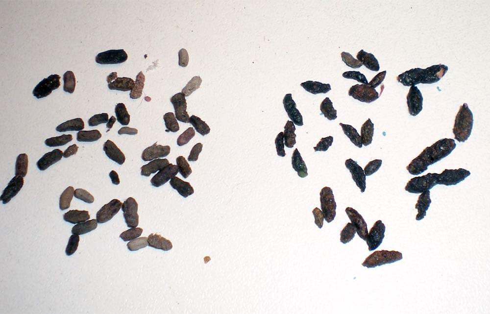 como-eliminar-las-cucarachas-22