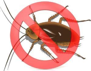 Cómo eliminar lascucarachas: Aprende cómo deshacerte de ellas.