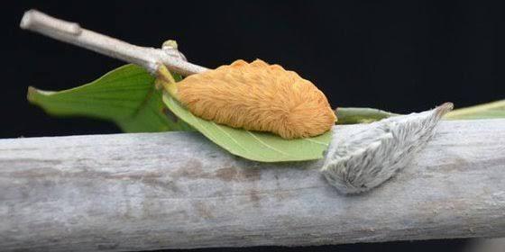 Oruga-peluche-pollito-22