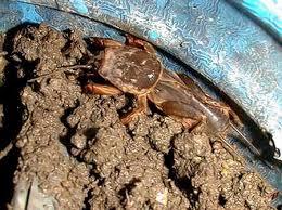 escorpión-o-alacrán-20