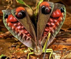 thysanoptera-3