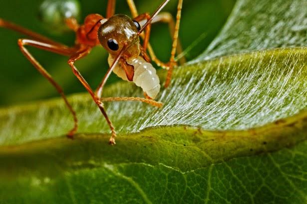que significan las hormigas