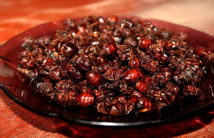 hormigas en la culinaria