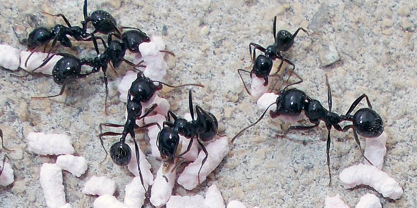hábitat de las hormigas