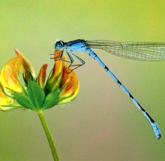 Insecto: Significado, alimentación, clasificación y más