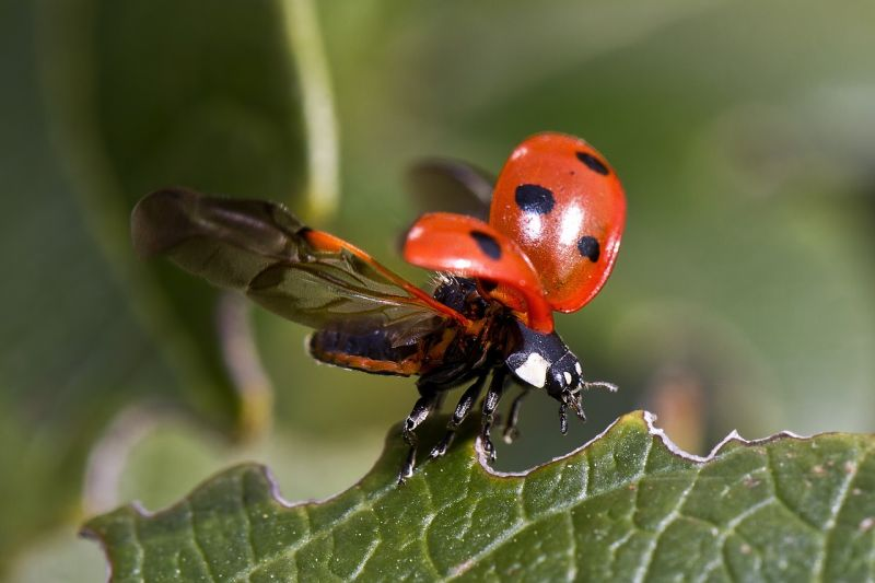 insecto17jpg