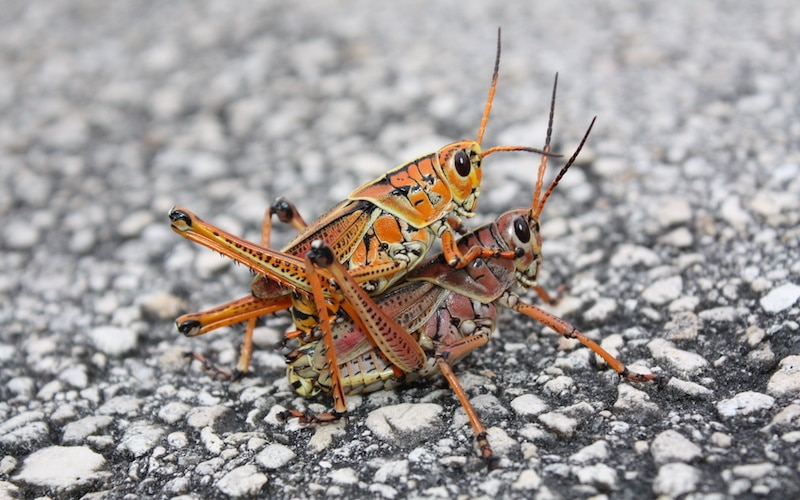 insecto18jpg