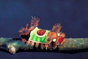 oruga-polilla-mariposa-8
