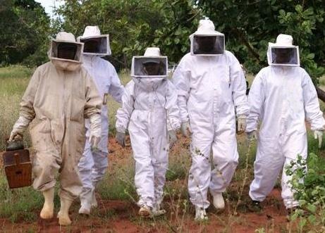 que-hacer-cuando-te-pica-una-abeja-14