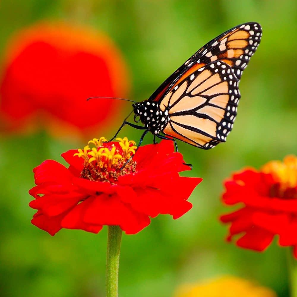 santuario-de-la-mariposa-monarca 3
