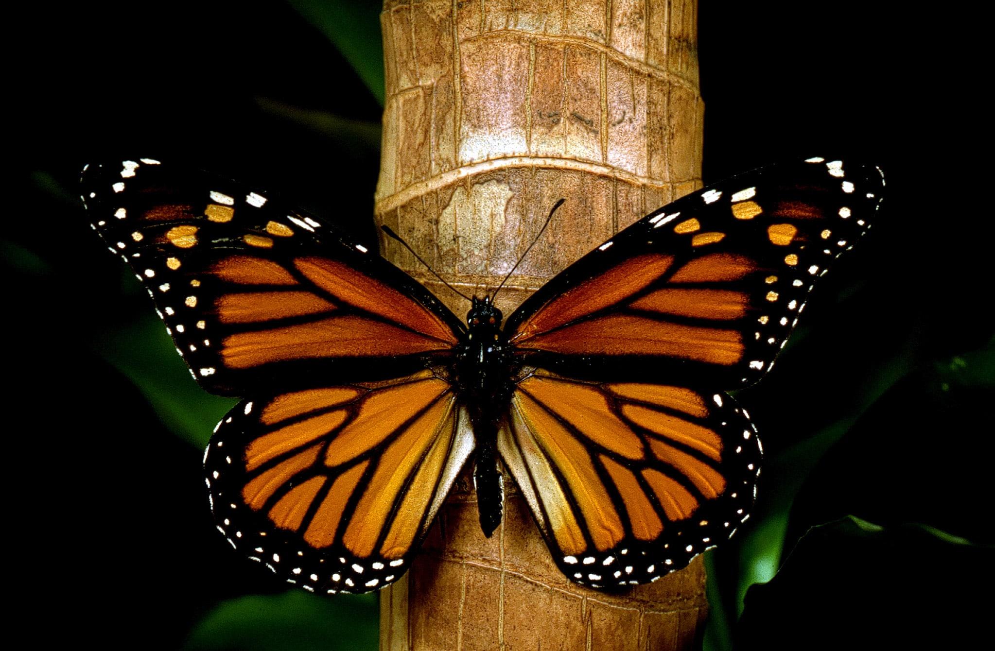 santuario-de-la-mariposa-monarca1