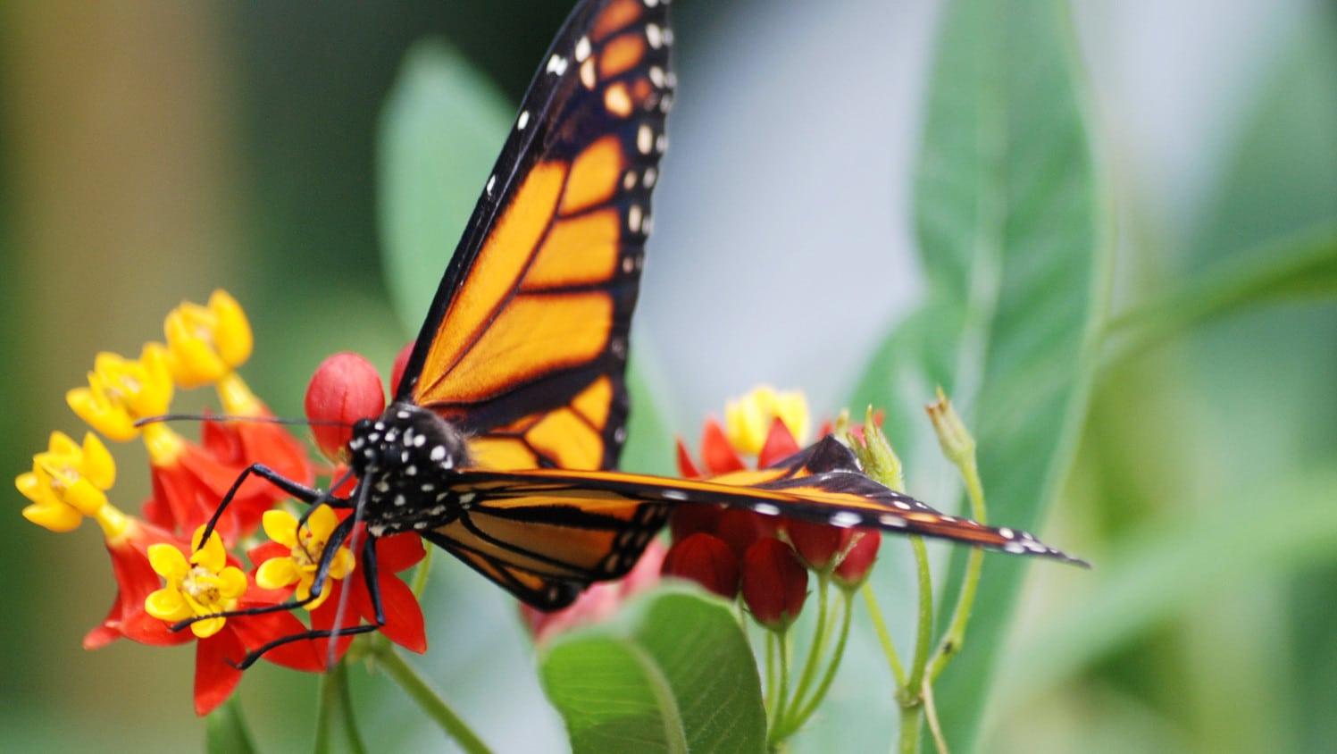 santuario-de-la-mariposa-monarca10
