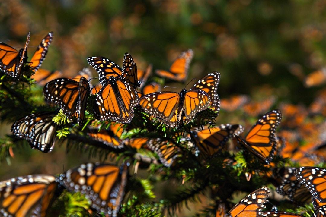 santuario-de-la-mariposa-monarca12
