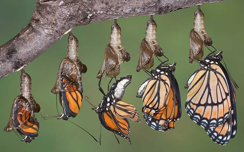 santuario-de-la-mariposa-monarca5
