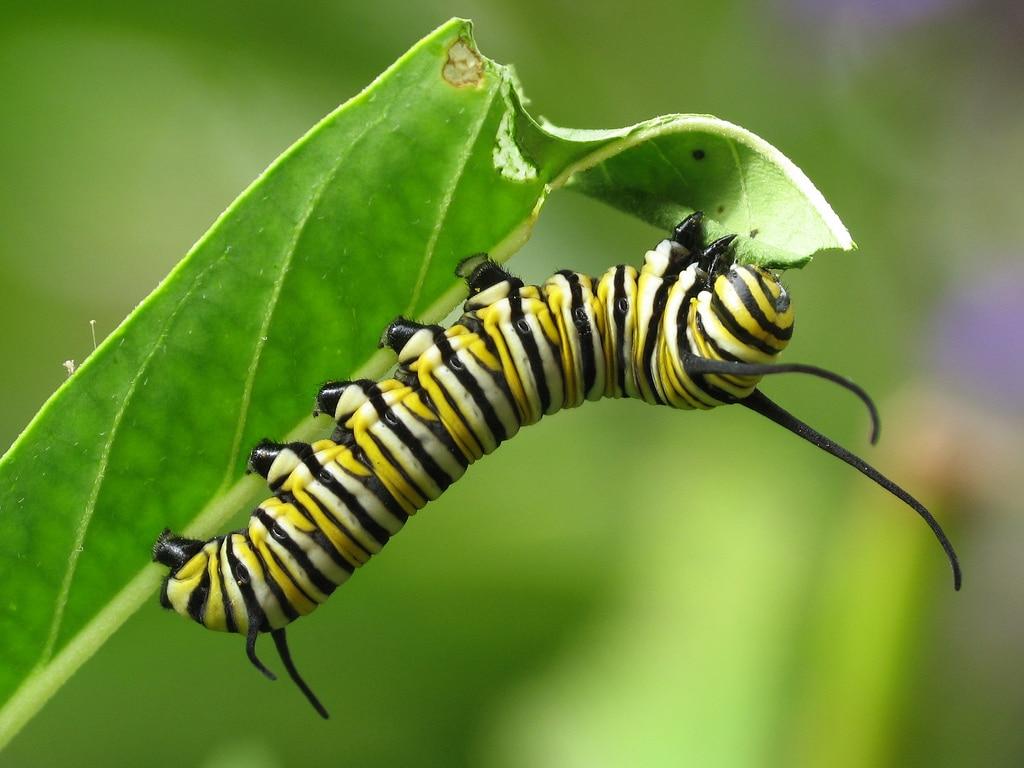 santuario-de-la-mariposa-monarca6