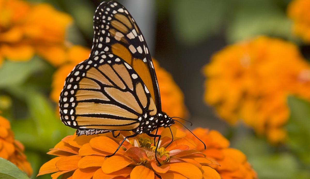 santuario-de-la-mariposa-monarca7