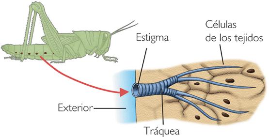 insectos-25