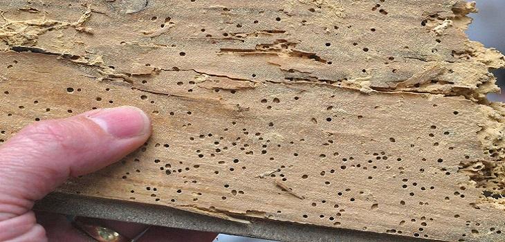 termitas-2