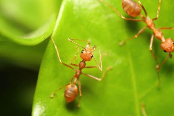 las-hormigas-53