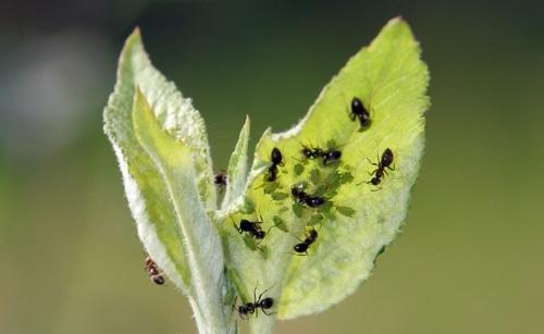 las-hormigas-41