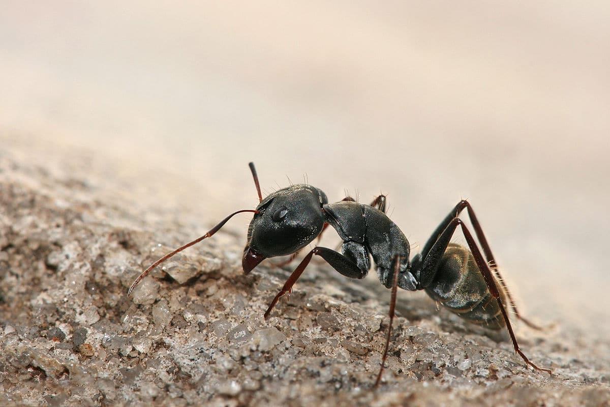 las-hormigas-7