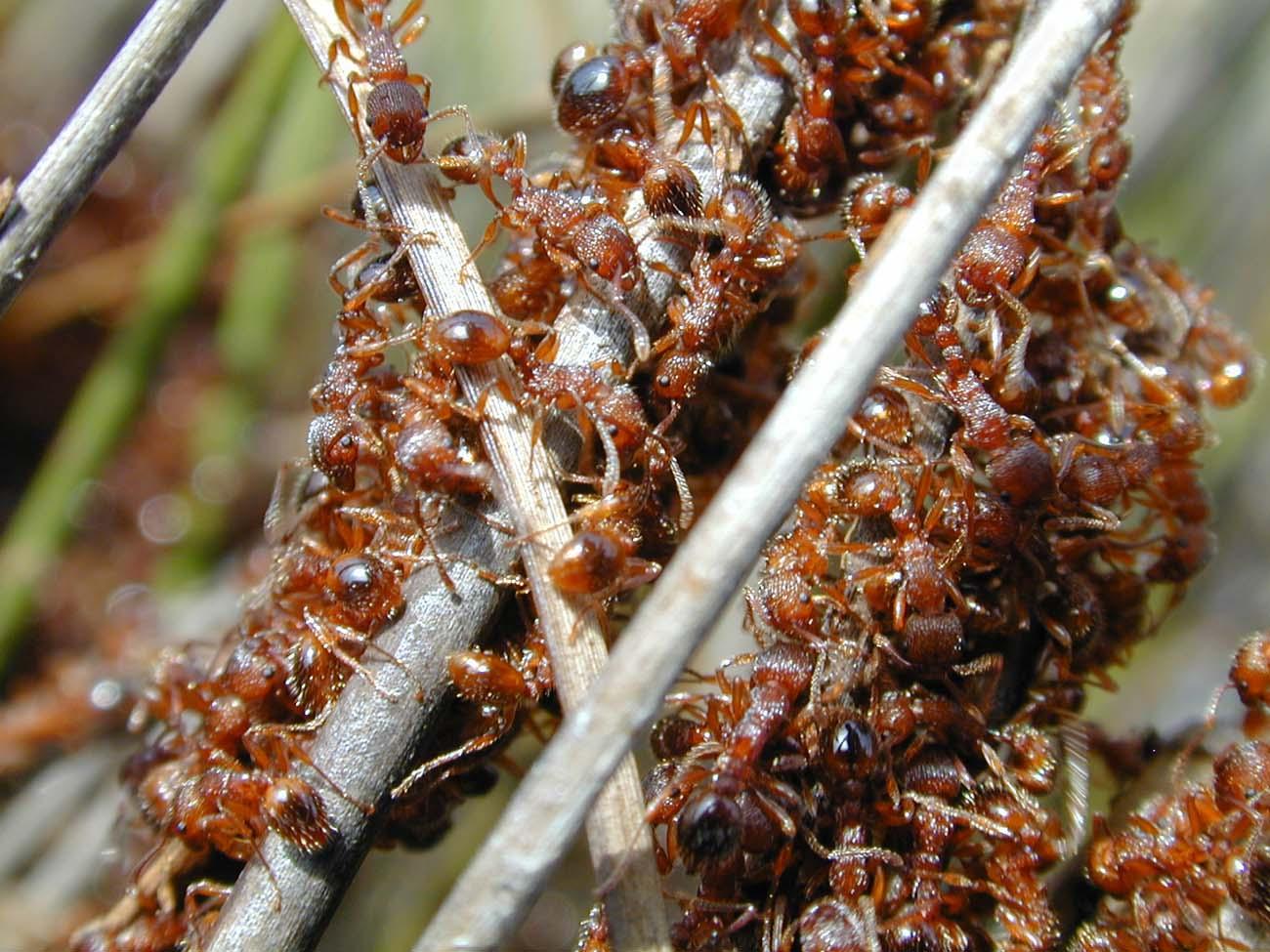 las-hormigas-56