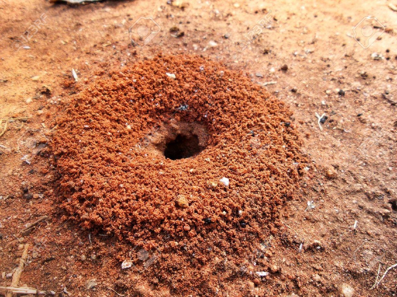 las-hormigas-8