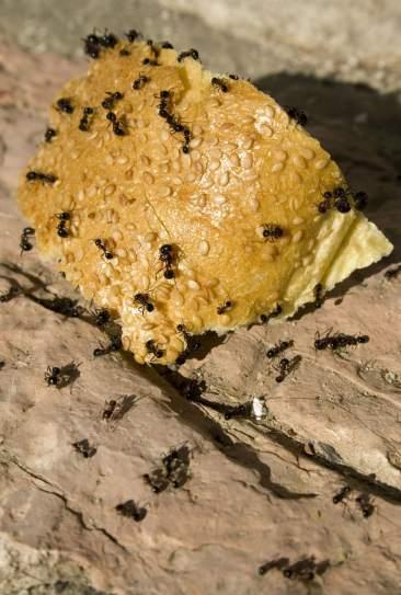 las-hormigas-62