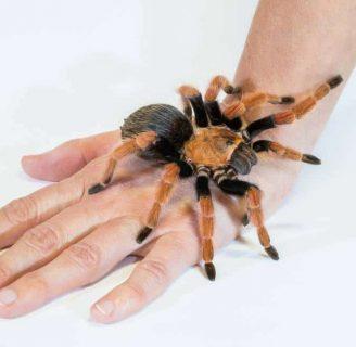 Arañasvenenosas: Conoce las más peligrosas del mundo